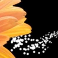 Lisa's blog